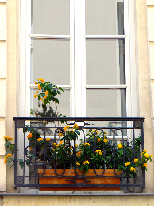 WINDOWBOXES14-2-1