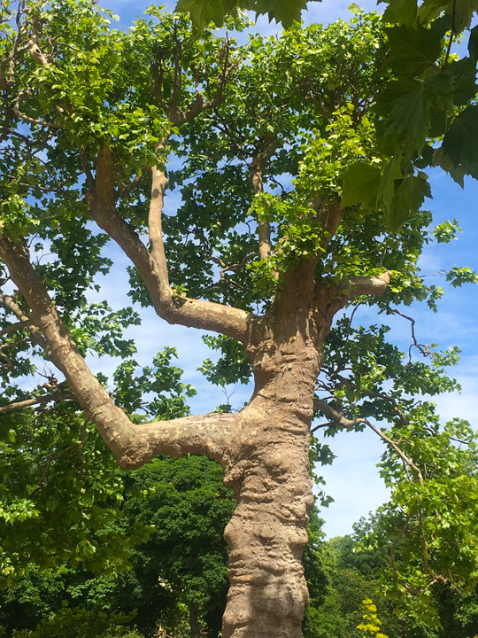 JDP TREES-10