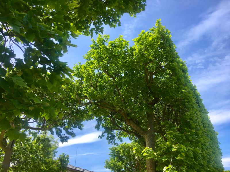 JDP TREES-3