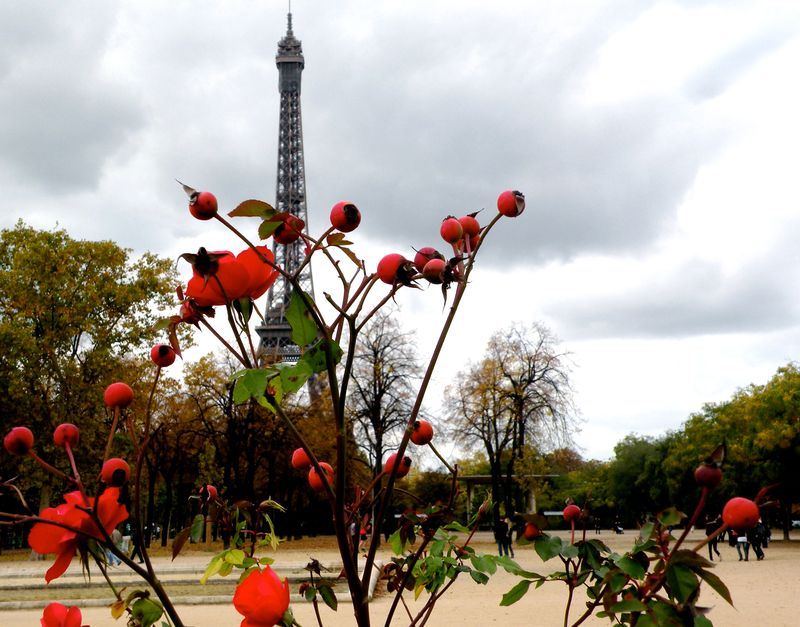 Red Roses at Eiffel Tower copy