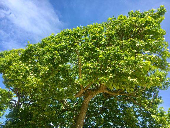 JDP TREES-1