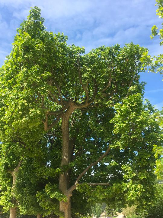 JDP TREES-2