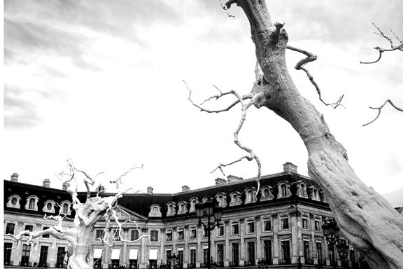 PVENDOME TREES-6