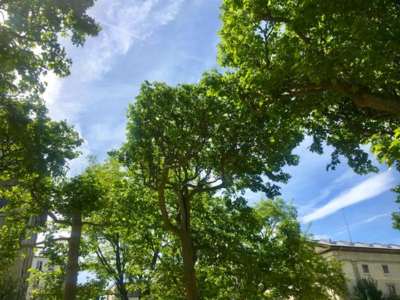 JDP TREES-4