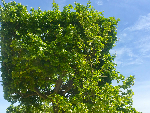 JDP TREES-7