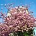 APRIL IN PARISDSCN0140