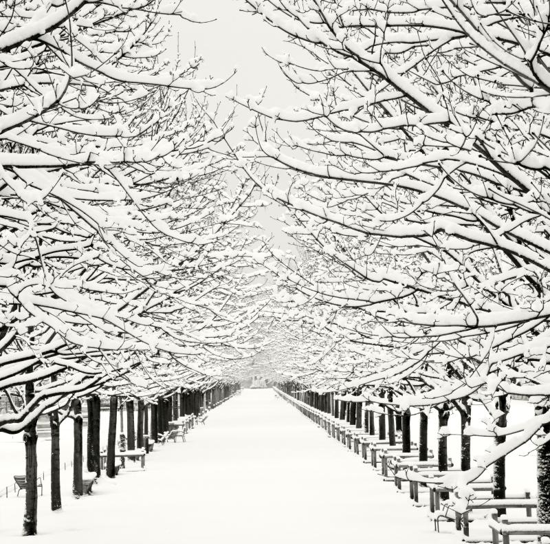Jardin des tuileries_© Meredith Mullins